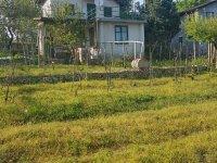 Къща, Област Варна, село Осеново