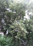 Едностаен апартамент, град София, Хаджи Димитър